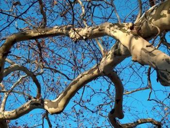 tree-1531704