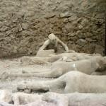 Pompeia 00